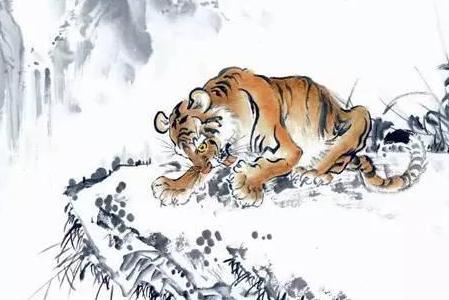 揭秘生肖虎的本性