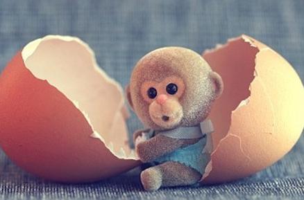 生肖猴年前该怎样完美的收尾